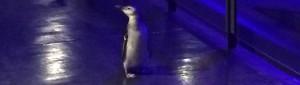 ペンギン、 (26)