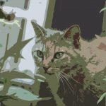 ウルトラスーパー猫会議