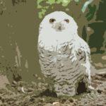 フクロウと仲良くなる方法